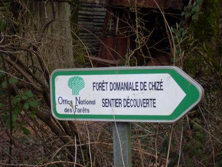 f54018d3837e Petite promenade dans la forêt domaniale de Chizé ! - Escales en ...