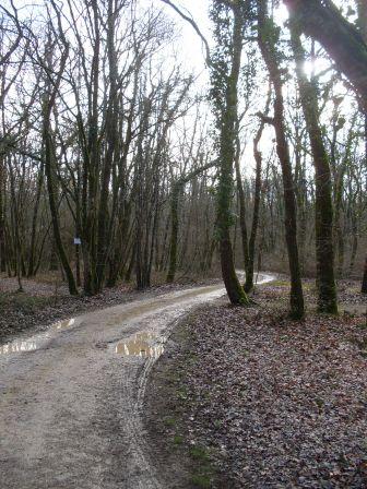 Petite promenade dans la forêt domaniale de Chizé